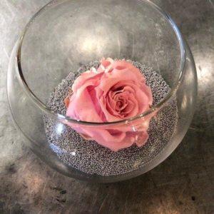 fleur coffret de noël
