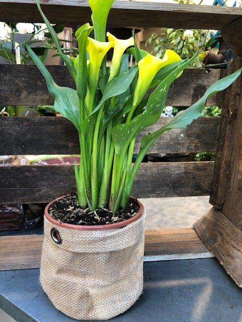 plante coffret de noël