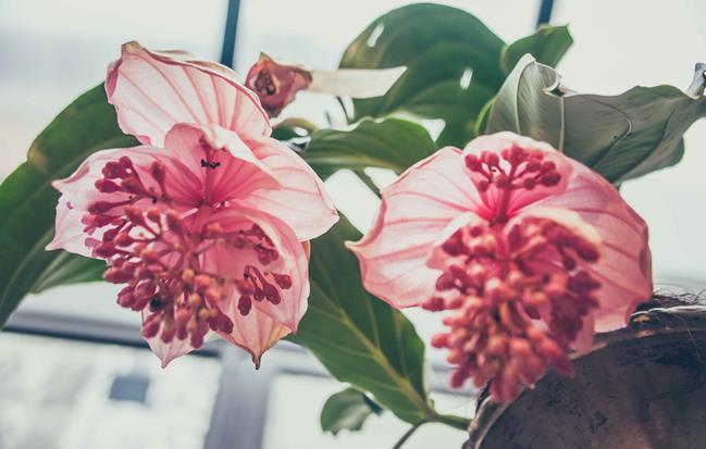 Newsletter Raconnat Fleuriste
