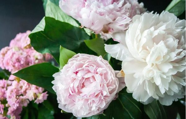 Livraison fleurs Raconnat